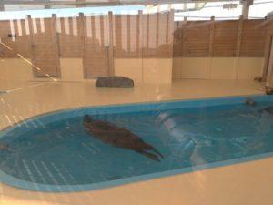 名古屋港水族館海豹