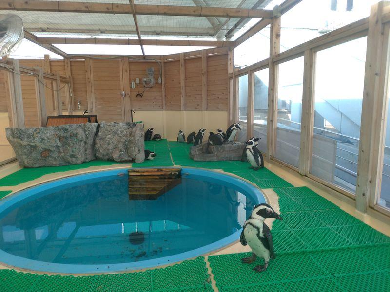 名古屋港水族館企鵝