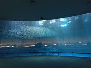名古屋港水族館沙丁魚