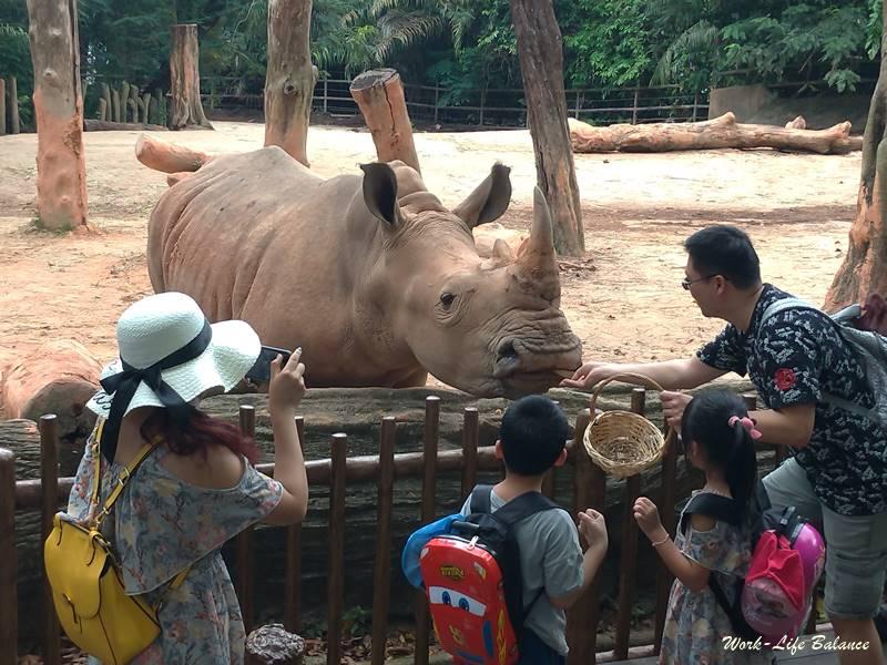 餵食白犀牛