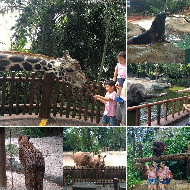 新加坡動物園攻略
